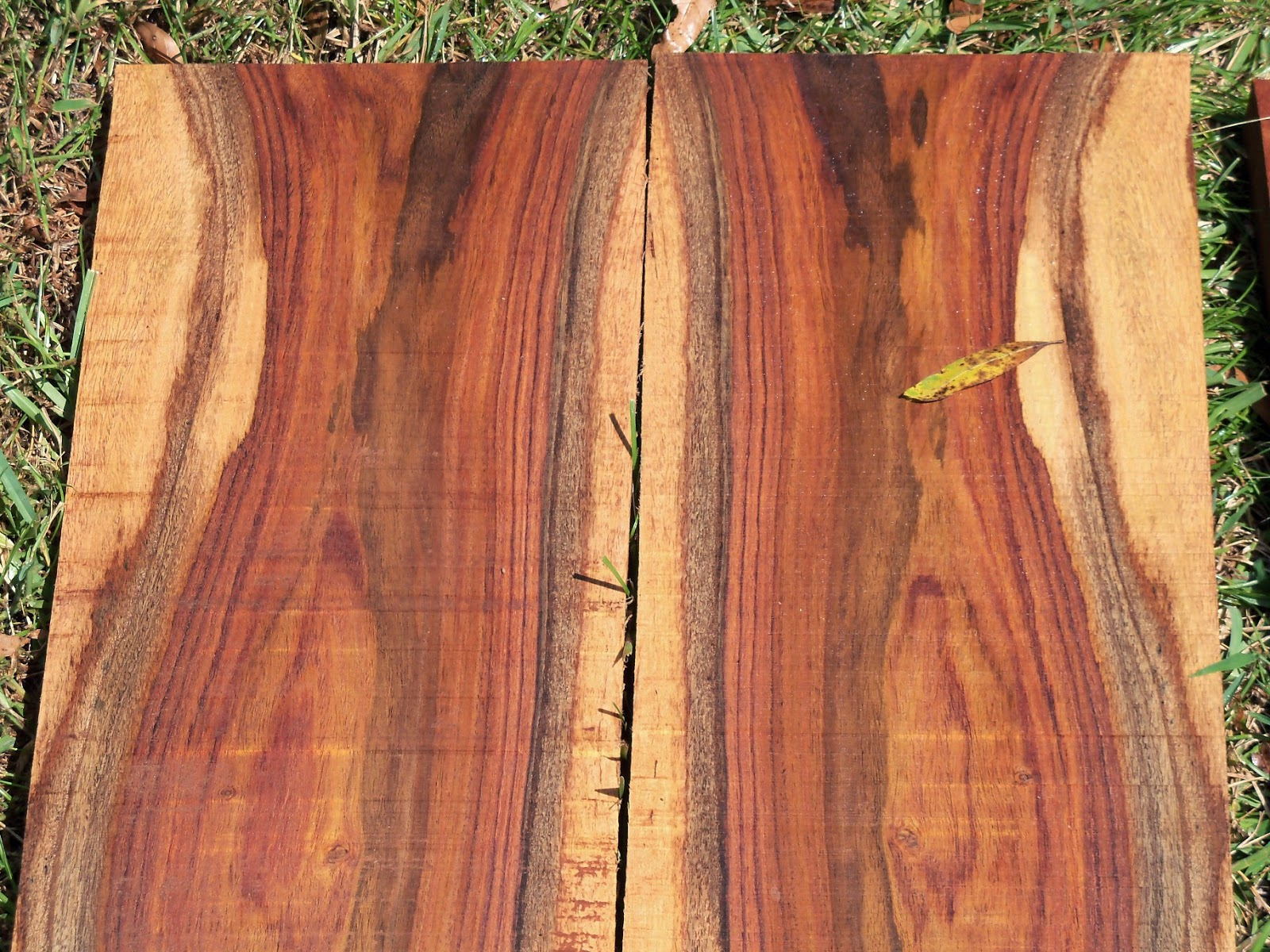 Destruction for fun and profit lost rosewood and the for The rosewood