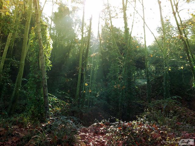 bosque-mañana-otoño