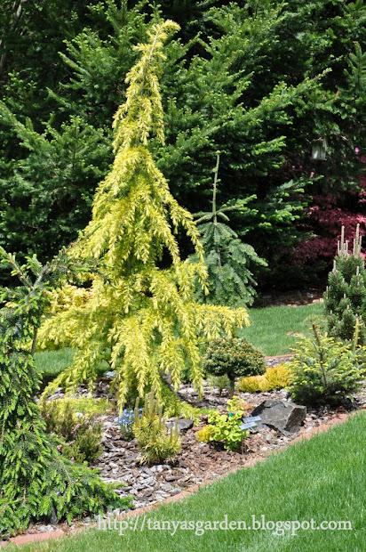 mysecretgarden garden of conifer
