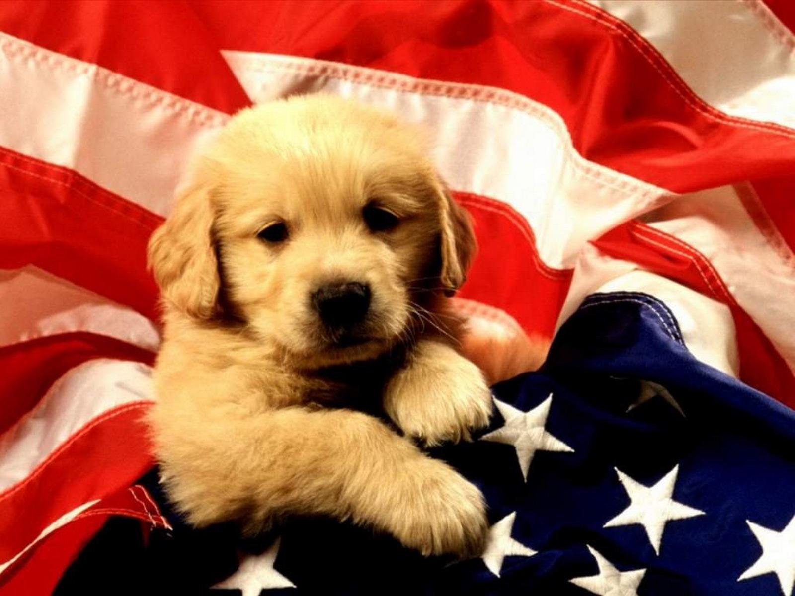 http://2.bp.blogspot.com/-dFDou1xtQjo/Tcv_sduHb1I/AAAAAAAAM04/f9bXKEAPHdY/s1600/american%2Bbrown%2Bdog.jpg