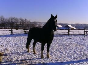 Otto auf der Winterweide