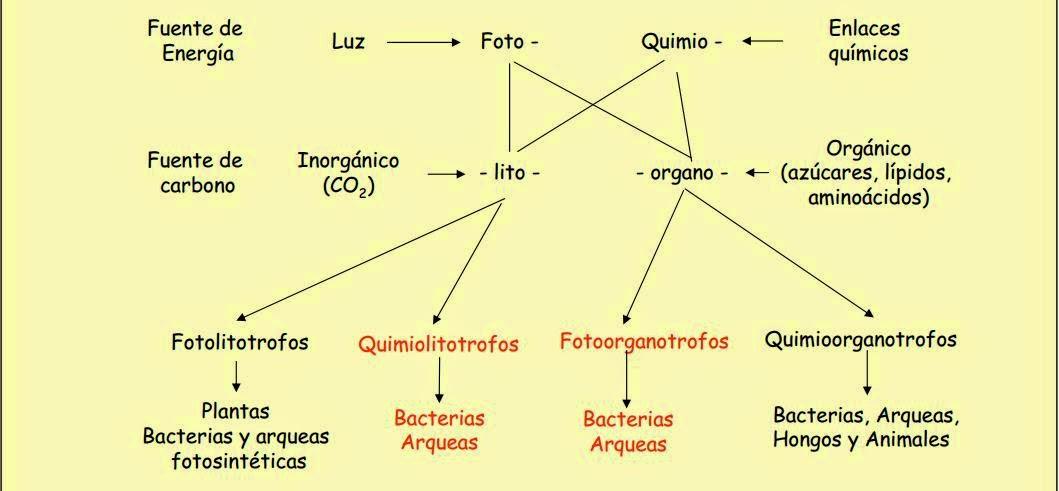 actividades anabolicas ejemplos