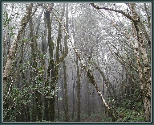 Las orqu deas de iv n arroyo my orchids in basque country - Quitar humedad del ambiente ...