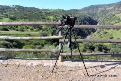 Birding en Sierra Morena