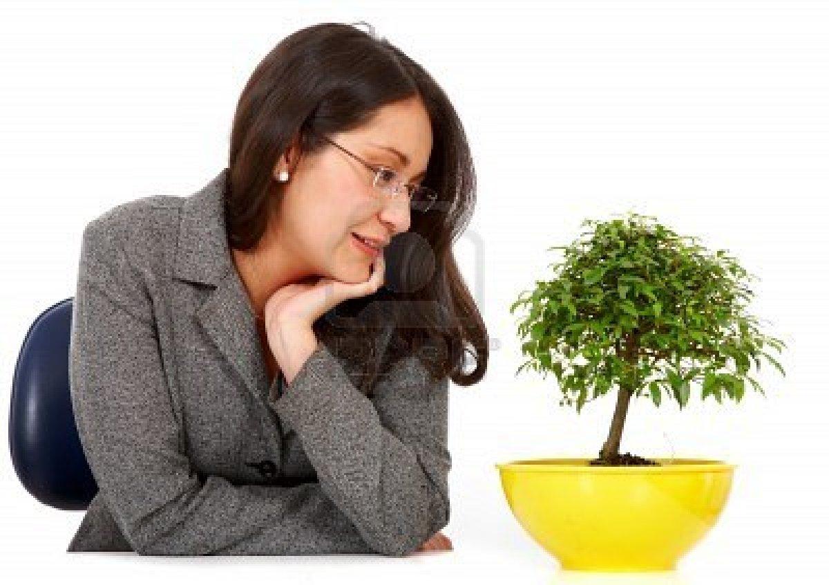http://2.bp.blogspot.com/-dFZ4rqmEXbc/TyvnGt5ttyI/AAAAAAAAEF4/M3LZDeyt91k/s1600/bonsai.jpg