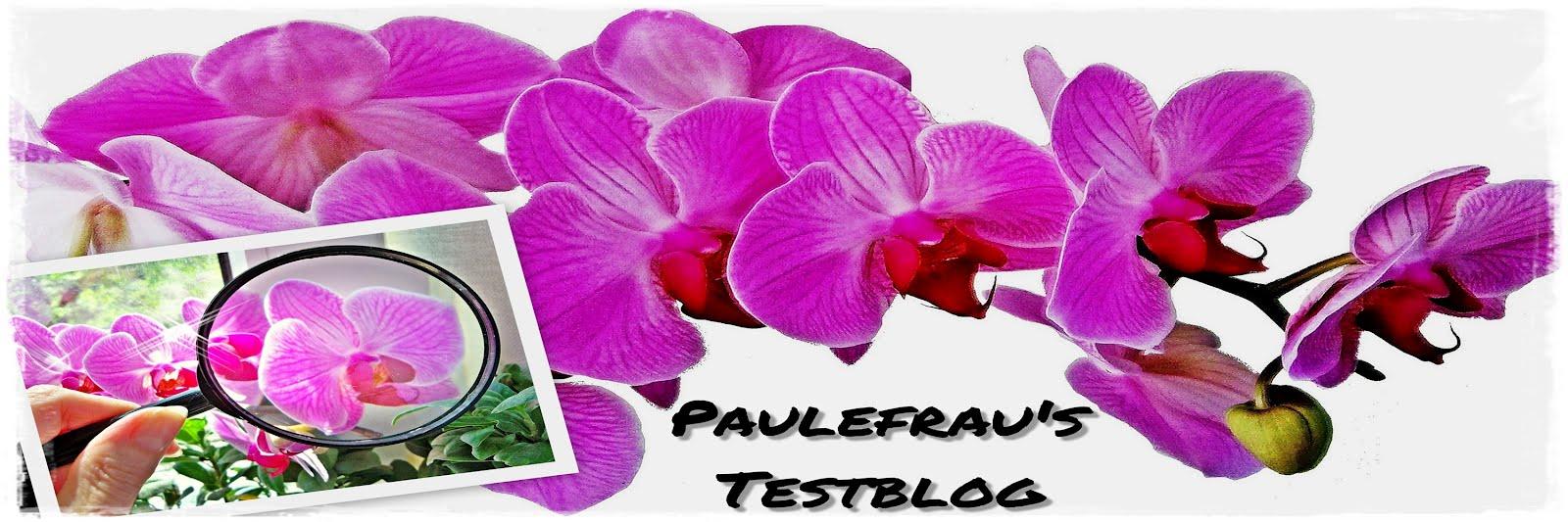 Paulefrau´s Testblog