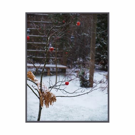 Vinter i haven med sne, røde æbler og rent udtryk