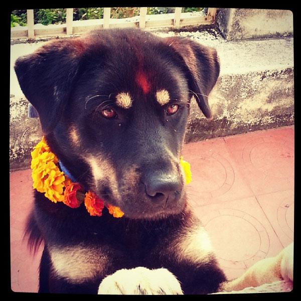 Festival Napalês presta homenagem aos cães