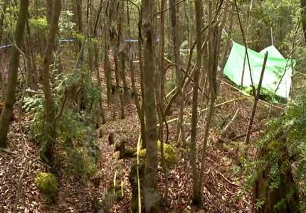 Bosque de suicidios