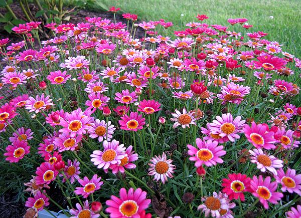 flores para jardim de outono