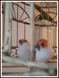 -Lintuhäkin asukkaat palasivat-