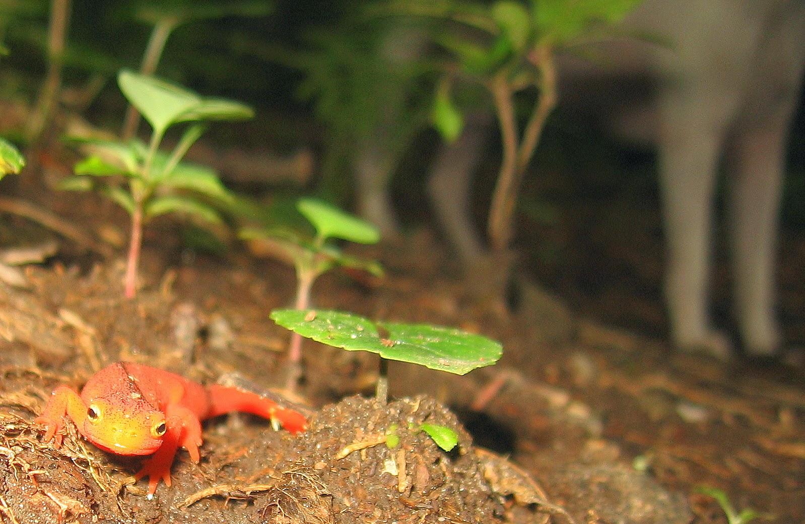 Salamander and Felix