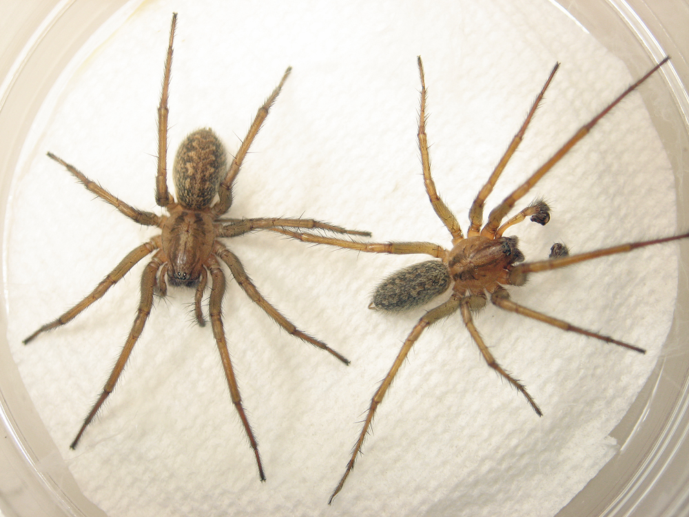 Elsie Park: HOBO Spider Infestation!