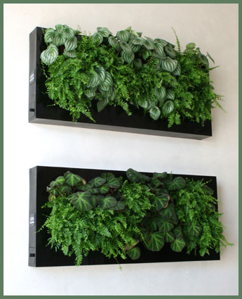 Verdes ares jardim vertical Plantas para paredes verdes