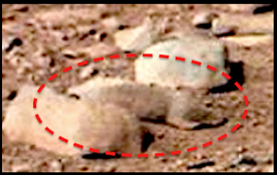 火星のリス