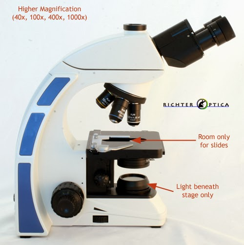 biology microscope diagram