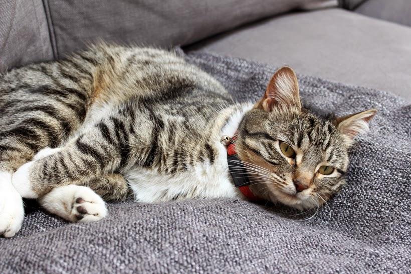 Sleepy Effie