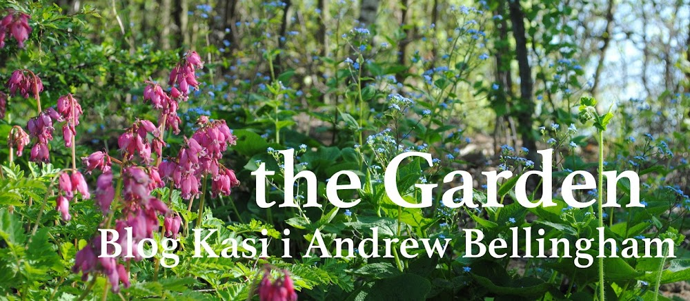 the garden - Blog Kasi & Andrew Bellingham