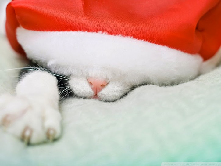 http://wallpaperswide.com/santa_cat_3-wallpapers.html