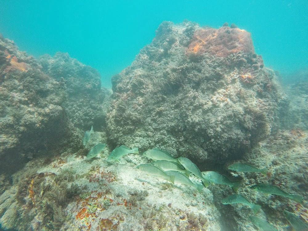 Golden Beach Boulder Reef Snorkeling