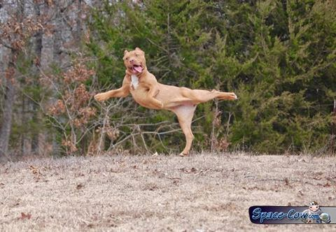 funny ballerina dog picture
