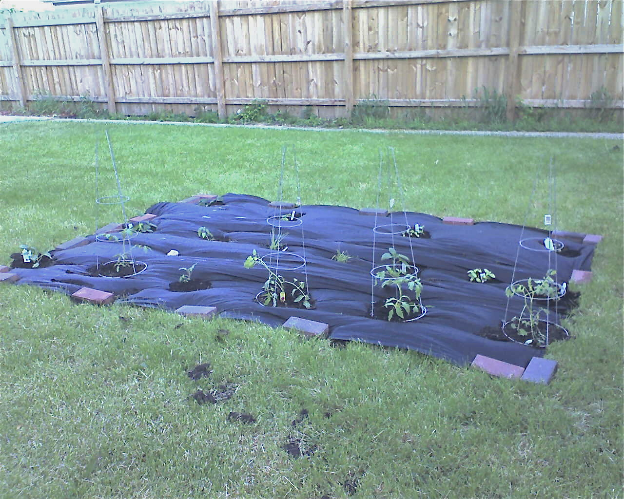 My Skinny Garden: About, Part 2