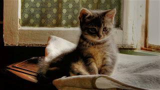 Super Cute Cats Wallpaper