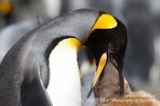 Brent Stephensons Birding Blog