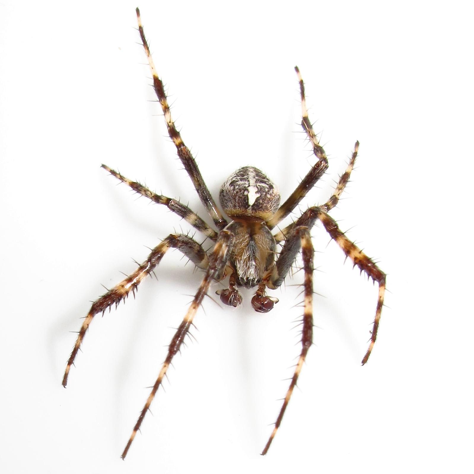 thursday 28 august 2014 - Garden Spider