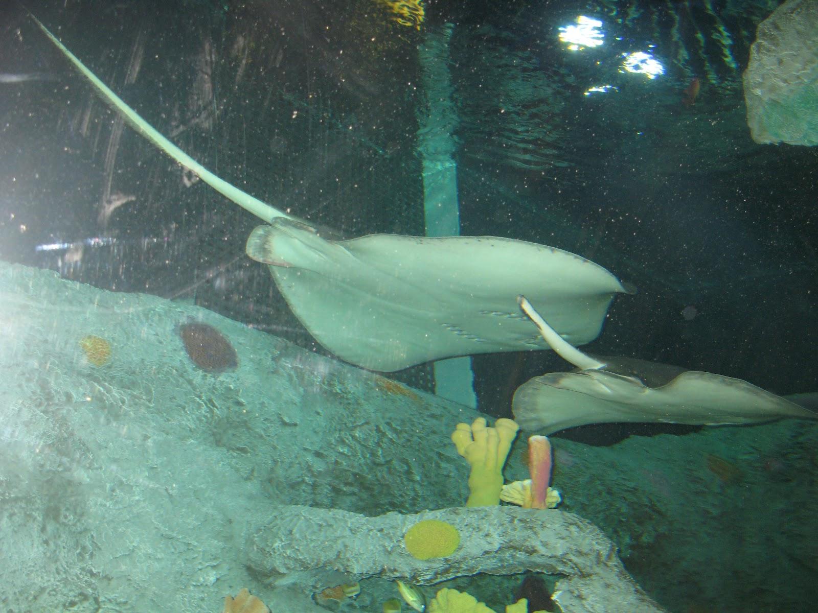The Kerrie Show Sealife Aquarium Kansas City Field Trip