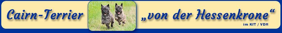 """Cairn Terrier """"von der Hessenkrone"""" im KfT/VDH/FCI"""