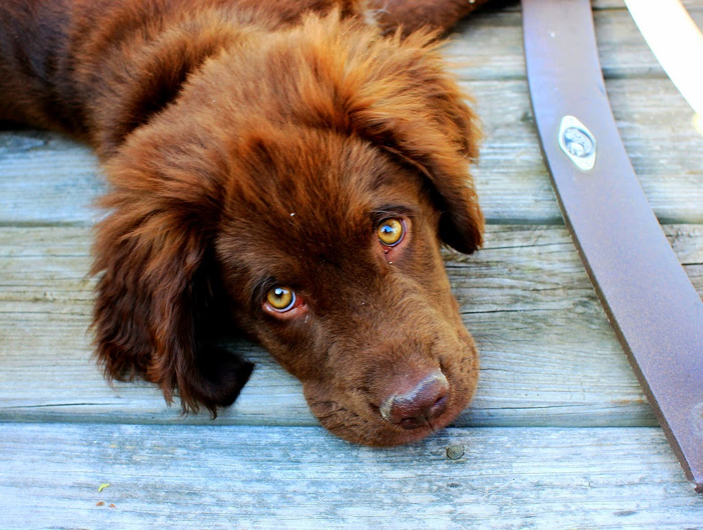 10 Things Dogs Are Thinking about Humans