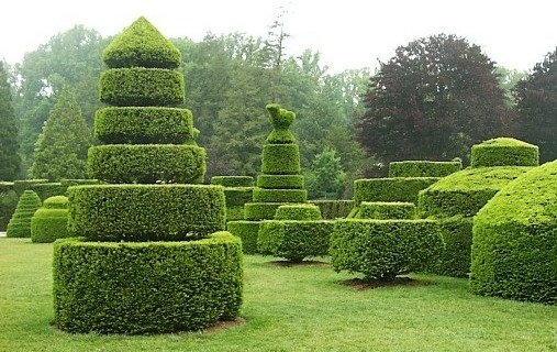 plantas jardim classico : plantas jardim classico:Trimming Hedges into Shapes