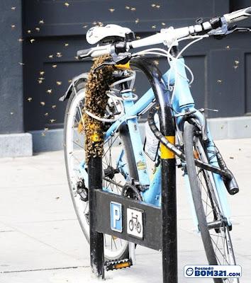 Cara Mengelak Basikal Anda Dicuri Walaupun Berkunci
