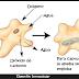 Digestión intracelular y extracelular