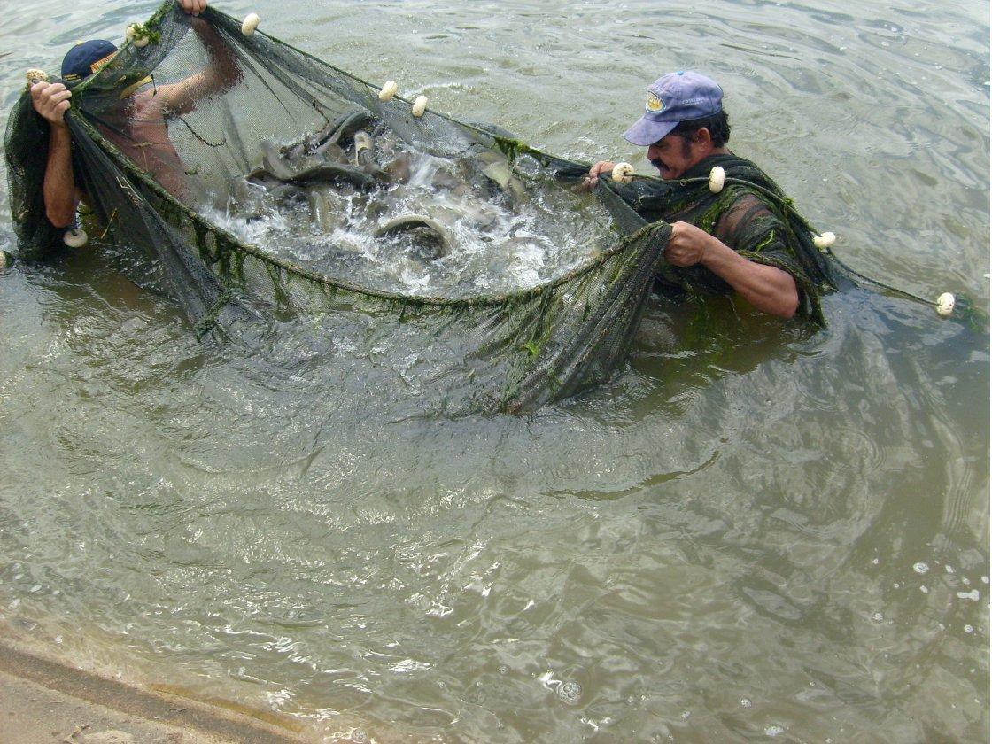 Simpósio internacional de aquicultura e pesca só até o dia 31