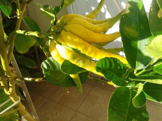 Le bicarbonate de soude le bicarbonate de soude au jardin for Bicarbonate de soude comme desherbant