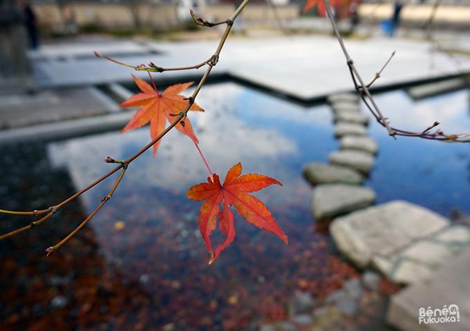 Momiji - Ukidono, Dazaifu, Fukuoka