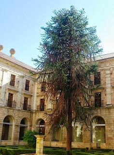 monasterio de Corias, claustro