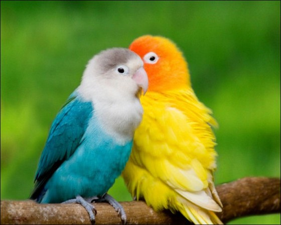 Beautiful love birds images - photo#2