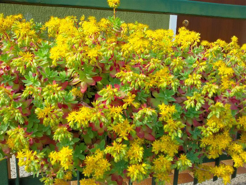 Pì Creativa: Un cuscino di fiori gialli