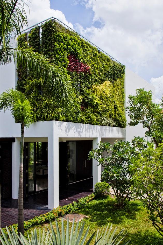 desain rumah minimalis dengan dinding hijau rancangan