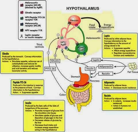 Materi LENGKAP Metabolisme Mikroorganisme (Mikroba)