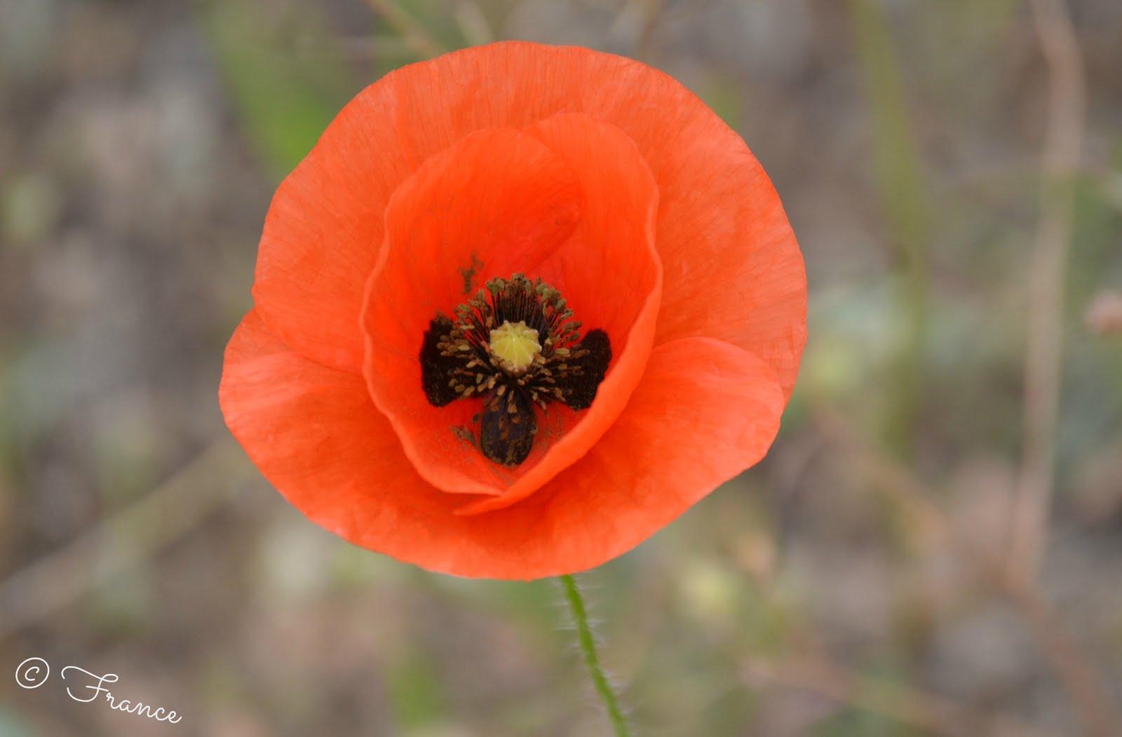 Une fleur si fragile