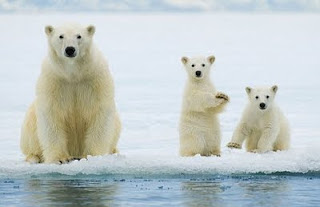 Cute Bears 2012