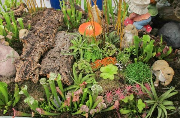 Plantas Y Flores Plantas Para Terrarios - Terrario-para-plantas