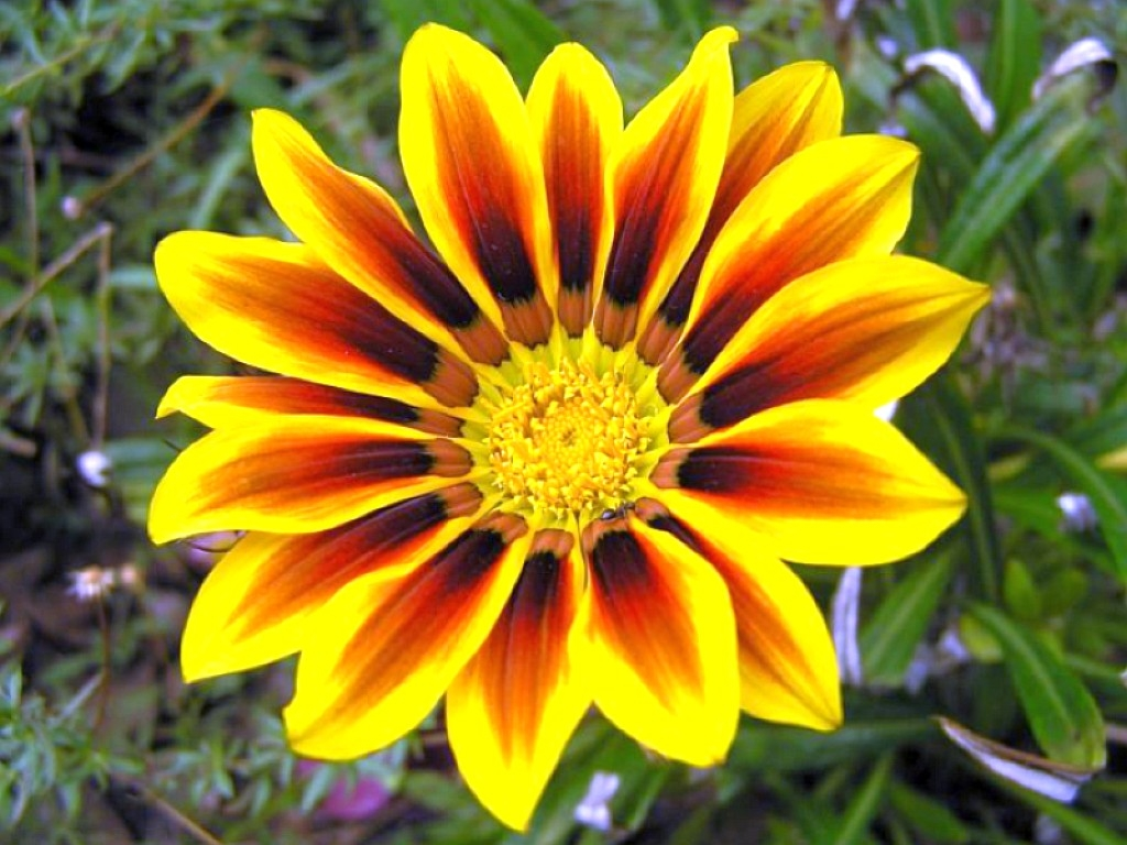 http://2.bp.blogspot.com/-dNsTOctJXfE/UWjHJLH7JVI/AAAAAAAABJw/YdJse6MrOyA/s1600/Yellow_Flower_Wallpaper_1024x768_wallpaperhere%2B(1).jpg