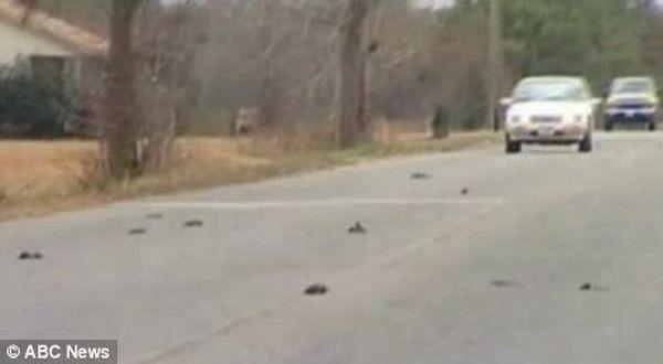 Fenomena Hujan 5.000 Bangkai Burung Hitam di Arkansas