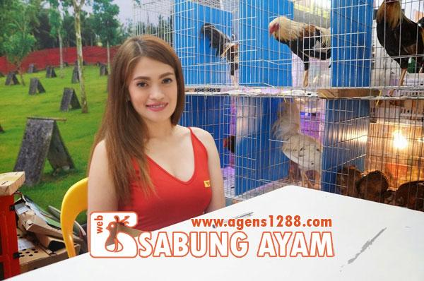 Hasil Pertandingan Arena AR1 Sabung Ayam S1228.net 13 November 2015