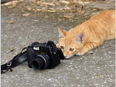 cat clicking picture, funny cat, smile please